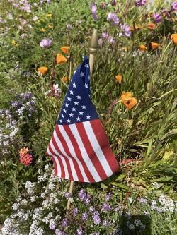 Lawn flag amongst flowers